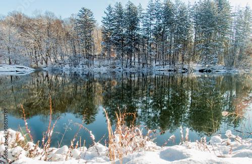 Fotografía  Irvington Woods, New York