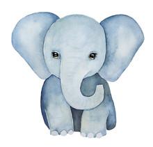 Cute Little One, Baby Elephant...