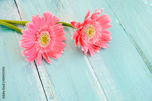 Pink flowers on vintage wooden in blue paint background vintage pink flowers on vintage wooden in blue paint background vintage pastel color tone concept mightylinksfo
