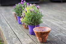 Vintage Style Flower Pots And ...