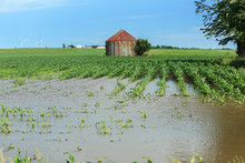 Corn Field Flooded By Summer R...
