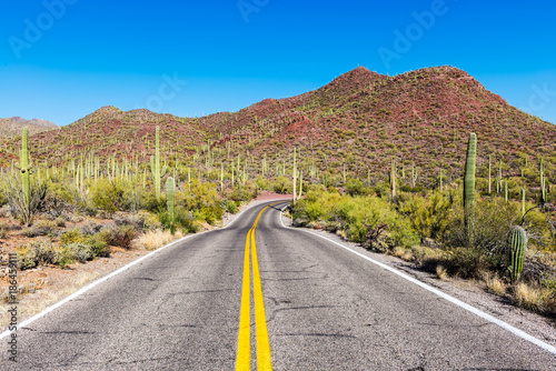 A long empty road leads through the Saguaro National Park, Arizona, USA