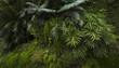 canvas print picture Tropical vegetation in Rio de Janeiro, Brazil