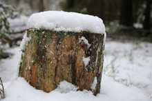 Tree Stump Close-up In The Sno...