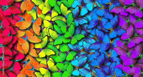 Fototapeta  Colors of rainbow