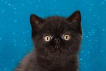 Kitten On A Monophonic Backgro...