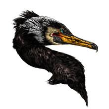Bird Cormorant Head Sketch Vec...