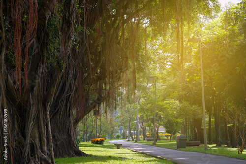 Fotografia, Obraz  Public park for background.