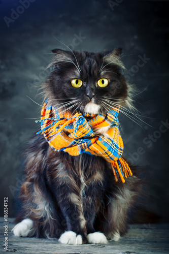 Photo sur Toile Croquis dessinés à la main des animaux Cat, Portrait of a funny cat with big yellow eyes.