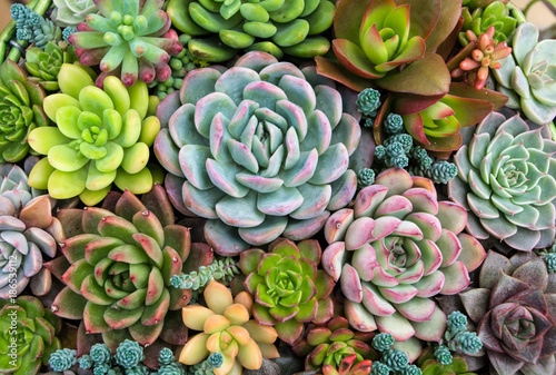 Rectangular arrangement of succulents; cactus succulents in a planter Fotobehang