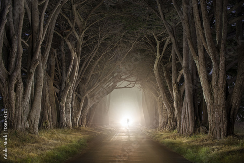 Silhouette man walking on tree lined road in forest