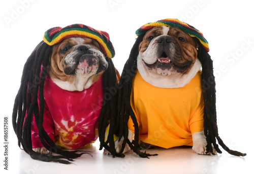 Fotografie, Tablou  two dogs with dreadlock