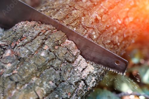 Fotografie, Obraz  Hand hacksaw on wooden wood cutting on natural blurred background