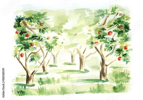 Fruit garden landscape Fototapeta