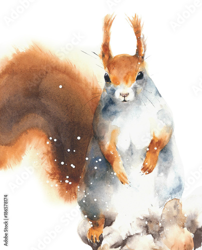 Squirrel red squirrel rodent cute animal in winter snowing greeting card Christmas watercolor painting illustration isolated on white background