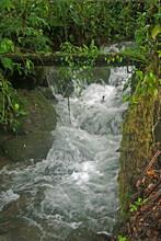 Ecuadorian Waterfall In Rain Forest On A Finca Coffee Farm San Jacinto Carchi