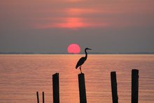 Heron Perching On A Piling At ...