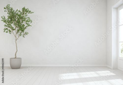 Valokuva  Indoor plant on wooden floor with empty white concrete wall background, Tree nea