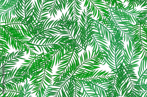 Ingelijste posters Tropische Bladeren Seamless pattern with palm tree green leaves on white background.