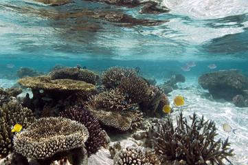 Coral Reef - Ari Atoll - Maldives