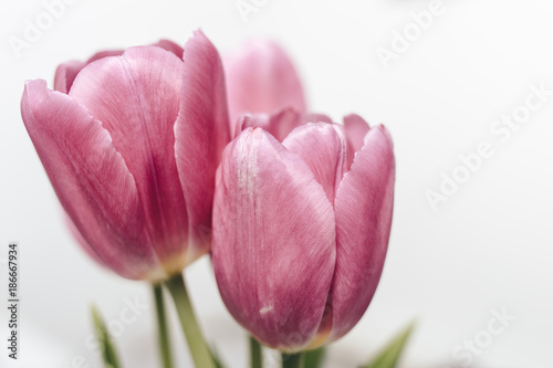 Fototapety, obrazy: Pink tulip flowers bouquet isolated on a white background with textured effect petals