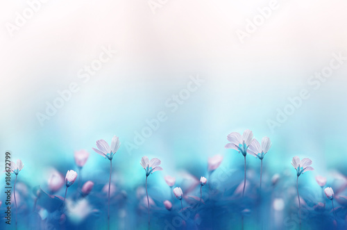 Fotobehang Bloemen Spring forest white flowers primroses on a beautiful gentle light blue background. Macro. Floral desktop wallpaper a postcard. Romantic soft gentle artistic image, free space for text.