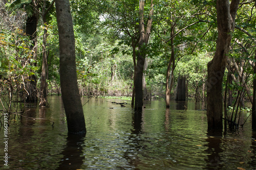 Fotografija  Panorama from Amazon rainforest, Brazilian wetland region.