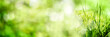 Leinwandbild Motiv Abstract green bokeh background