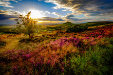 Sunset At Roseberry Topping, N...