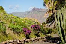 Cacti Park In Gran Canaria