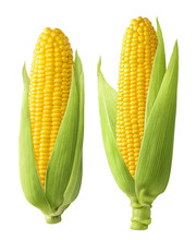 2 Fresh Corn Ears With Leaves Isolated On White Background