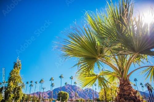 Fotografering Coachella Valley Vegetation