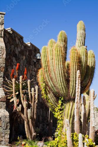Tuinposter Canarische Eilanden Cacti Green spring landscape on Canary Islands
