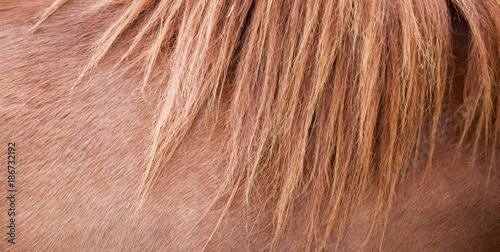 Horse mane and brown horse skin Fototapeta