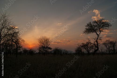 Papiers peints Corail Serengeti sunset