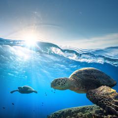 Żółw morski w płytkiej błękitnej wodzie