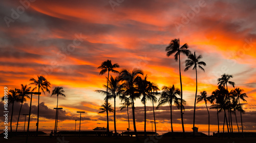 Tuinposter Palm boom Hawaii sunset
