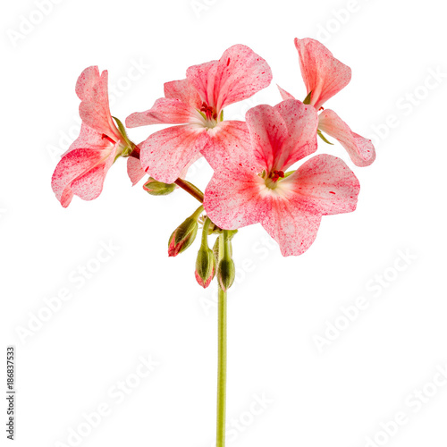Photo Isolated on white background home flower