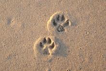Dog Footprints On The Beach
