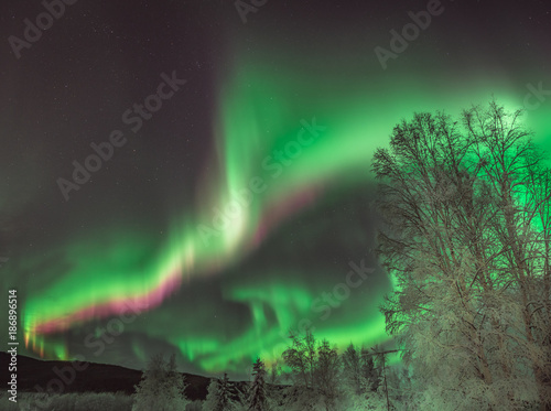 Poster Aurore polaire Dramatic green Aurora Borealis in Alaska night sky