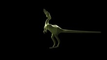 Compsognathus 3D Animated Dino...