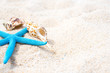 Sea shells and starfish on sand. Blue sky Summer beach background.