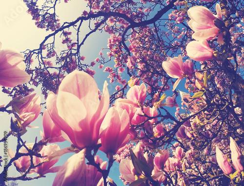Plakat Wiosna jest tutaj