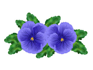 NaklejkaViola (garden pansy). Hand drawn vector illustration of blue viola flowers with green leaves on white background.