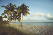 USA, Florida, Key West, Palm T...