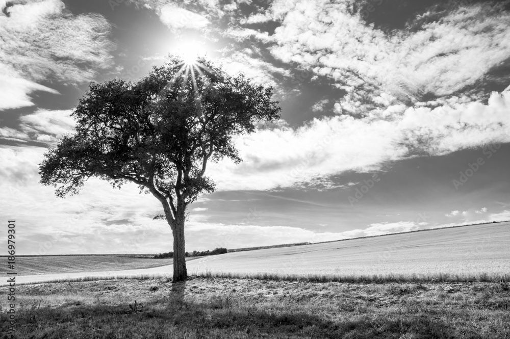 Fototapeta Black and White tree with the sun