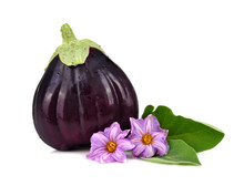 Ripe Big Eggplant