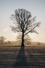 Sunrise Behind A Tree On A Frosty Morning. Norfolk, UK.