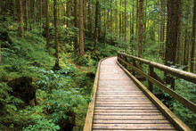 Wooden Pathway Through Green P...