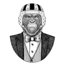 Gorilla, Monkey, Ape Elegant Rugby Player. Old School Vintage Rugby Helmet. American Football. Frightful Animal Vintage Style Illustration For Tattoo, Emblem, Badge, Logo, Patch, T-shirts